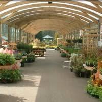 garden centres near badshot lea