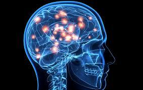 Resultado de imagen de El cerebro de una persona Social