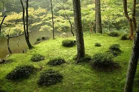 Image result for images zen garden
