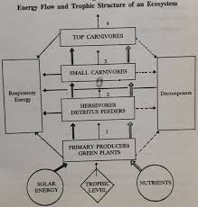 Ecosystem Pyramid Chart Trophic Levels And Ecological Pyramids