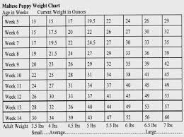 Shihtzu Weight Chart Goldenacresdogs Com