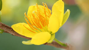 Viết một đoạn văn tả một loài hoa, một thứ quả mà em yêu thích