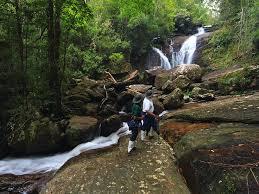 Sinharaja forest essay