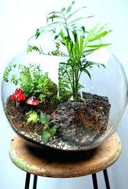 tabletop water garden terrarium tabletop water garden plants tabletop water garden diy