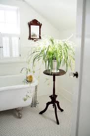bathroom: Small Space For Bathroom With Tiny End Table For Good Bathroom  Plants On White