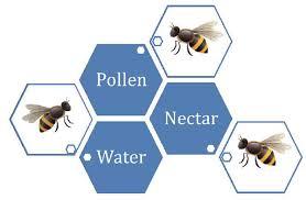 Feeding Honey Bees In Colorado 5 622 Extension