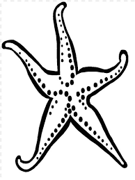 Small Picture Starfish Coloring Page Coloring Book