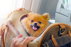 u s airline pet policies a complete