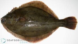 Image result for flounder