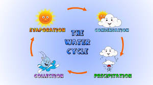 water cycle essay water essays essays on water compucenter essays  rain water cycle rain printable water cycle water cycle the water cycle how rain is formed