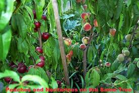 Search Photos Category Plants And Flowers U003e Trees U003e Other Fruit TreesDifferent Fruit Trees