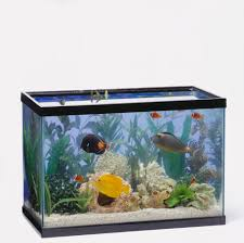 Tropical Fish in a tank