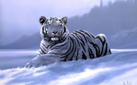 white tiger wallpaper desktop. Plain Wallpaper White Tiger Wallpaper Desktop Throughout E