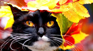 Autumn Cat Wallpapers - Top Free Autumn ...