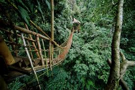 Hanging Tree House 10 Bridges That Will Make Your Legs Tremble Red Bull