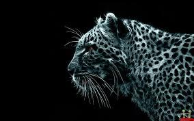 image detail for amazing beautiful cheetah hd wallpaper
