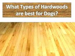 waterproof dog proof flooring urine pet laminate best dog proof hardwood flooring whats the best