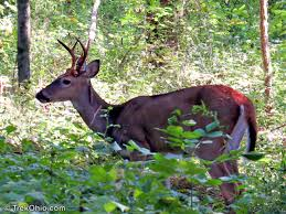 Ohio Deer Hunting Season 2018 2019 Trekohio