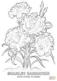 Small Picture Ohio State Flower coloring page Free Printable Coloring Pages
