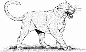Realistic Cat Coloring Pages Naxk Coloring Pages For Girls 13 And Up