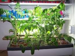 hydroponic herb garden. Container Gardens · Hydroponic Gardening Indoors Herb Garden