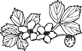 black and white strawberry clipart.  Strawberry Strawberry Coloring Book Cheesecake Plants Drawing Free Commercial  Strawberry Drawing Black And White  Throughout Black And White Clipart L