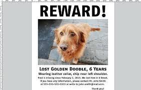 Lost Pet Flyer Maker Unique Lost Pet Poster Template Missing Dog Maker Cat Uk Eyfs