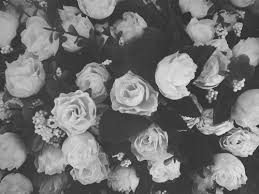 tumblr background black and white flowers. Floral Tumblr Black And White Roses Laptop Wallpaper Home With Background Flowers