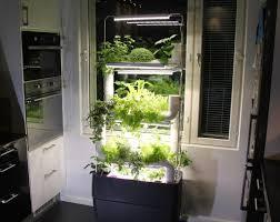 grow herbs with hydroponics