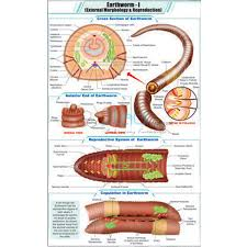 External Morphology And Reproduction Chart India External