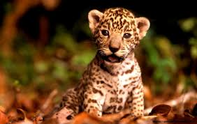 cute wild baby animal wallpaper. Cute Baby Wild Animals Wallpapers Google Search Intended Animal Wallpaper Pinterest