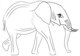 Small Picture African Elephant coloring page Free Printable Coloring Pages