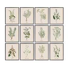 Printable Culinary Herb Chart Kitchen Herbs Printables Set Of 12 Vintage Culinary Herb Illustrations Botanical Wall Art Prints Instant Download