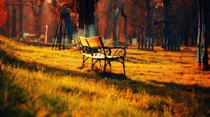 forest landscape bench free stock photos desktop wallpapers nature autumn tree fall leaves beautiful nature plant hd wallpapers