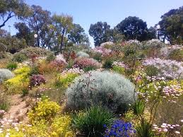 Small Picture 93 best Native Australian Gardens images on Pinterest Australian