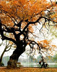 Image result for mùa thu hà nội