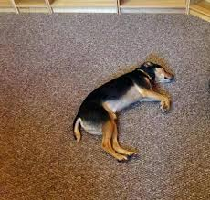 pet proof area rugs pet proof area rugs the best carpet for pets is nylon based pet proof area rugs