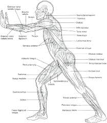 Body Systems Chart Human Body Systems Coloring Pages Catholicsagainsttorture Org
