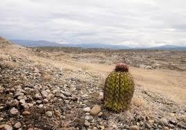 Кактусы пустыни Мир кактусов Кактусы пустыни это непременный атрибут этой сложной местности Кактусы пустыни процветают в экстремальных условиях