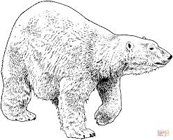 Small Picture Walking Polar Bear coloring page Free Printable Coloring Pages