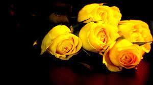 Yellow Rose Background on WallpaperSafari