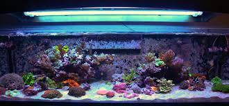 Saltwater Aquarium Lighting Guide Par Reef Tank Lighting Schedules Whats The Ideal Program