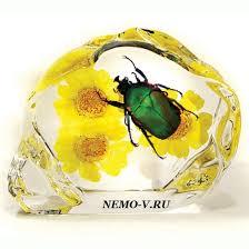 Жук Бронзовка Жук Бронзовка коллекция насекомых в Акриле сувенир арт 114