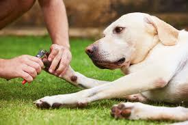 what do i do if i cut my dog s nails too short