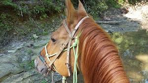 Color Coordinating Your Horse