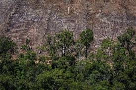 tropical forest cut down to make way for a palm plantation in papua indonesia in march 2018 ulet ifansasti greenpeace