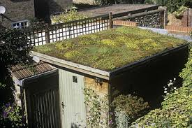 living roof shed