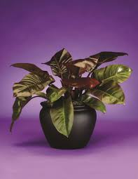 Find the right office plant with our plant brochure phillips