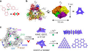 Nrf Size Code Chart Diverse Protein Assembly Driven By Metal And Chelating Amino