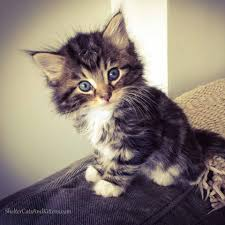 cats and kittens pictures. Beautiful Kittens Shelter Cats And Kittens Shared Catsu0027s Post Intended And Pictures O